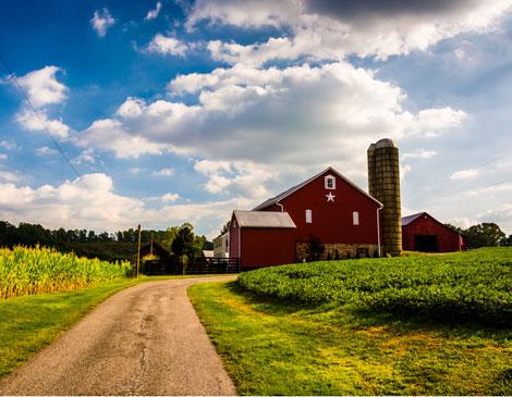 Farm CSA