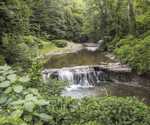 Bath Nature Preserve