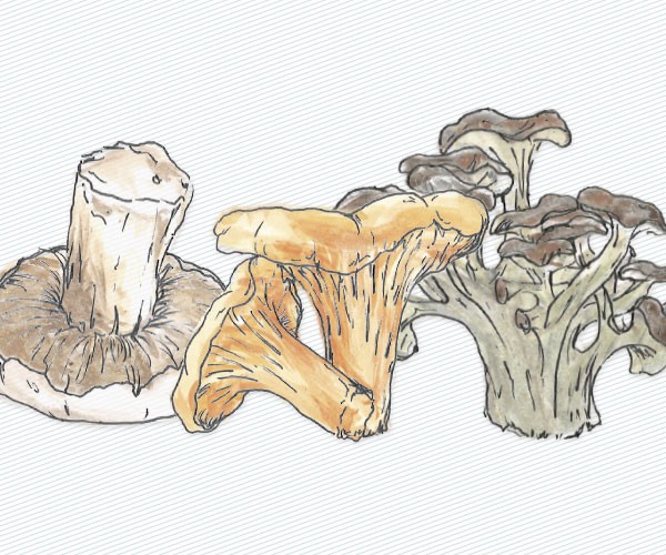 Discover The Magical World of Foraging For Mushrooms