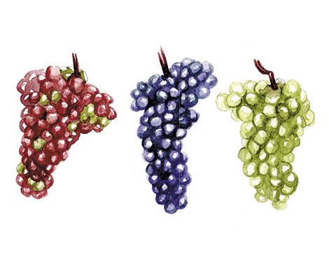 Ohio grapes