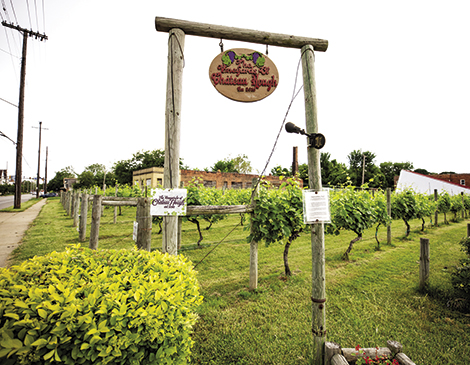 The Vineyard and Winery at Chateau Hough