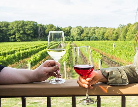 Tips for wine tasting