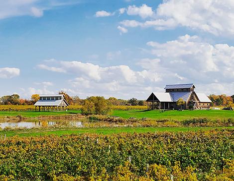 Vermilion Valley Sustainable Ohio Vineyards