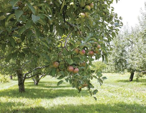 Hillside Orchard and Farm Market