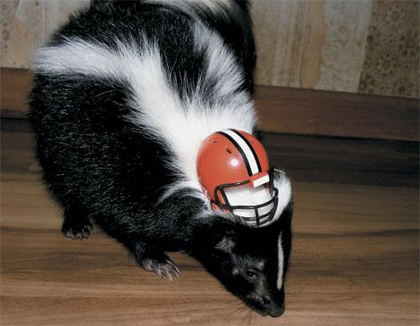 Tank the Skunk Browns