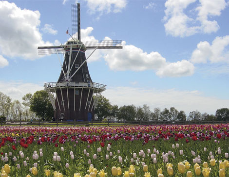 Article_DeZwaan-Windmill--Tulips