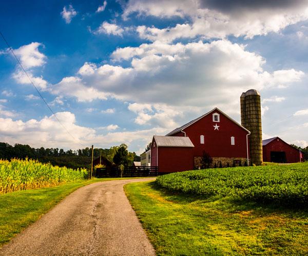Farm CSA Thumbnail