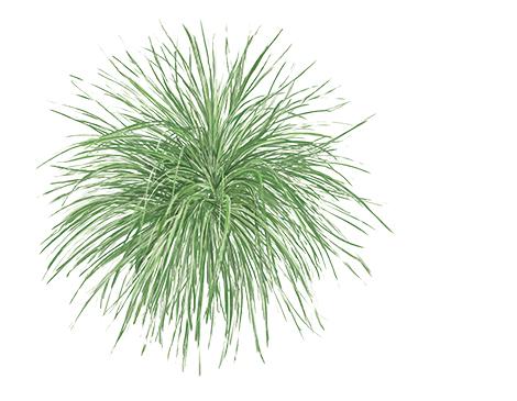 Hameln Grass