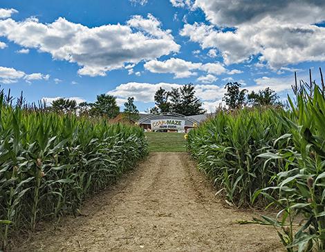 Lake Metroparks Farmpark Corn Maze