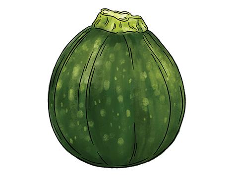 Round Zucchini Squash