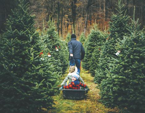 Chop One Down: 3 Christmas Tree Farms
