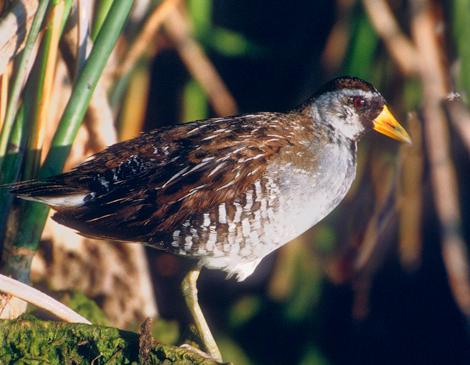 Three Fall Birding Spots We Love