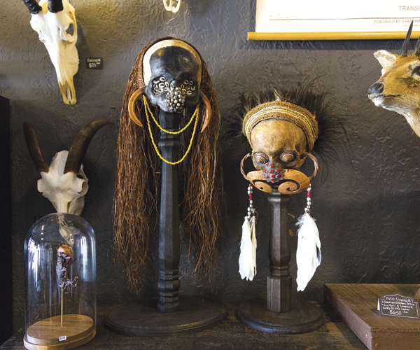 We Explore Oddity Store Cleveland Curiosities