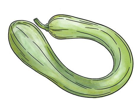 Tromboncino Squash
