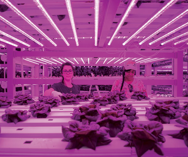 An Akron Company Is Farming Sustainable Produce Inside Former BFGoodrich Factory